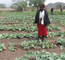 Ms Anna Nyarienda at her portion of the Garden in Masvingo Credit: OCHA/Zimbabwe