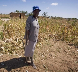 A woman stands outside of her temporary home and dried up maize crop in Epworth, in Harare, Zimbabwe. Like thousands of other Zimbabweans her family has been forced to move to Epworth and build a temporary home as ongoing economic problems throughout Zimbabwe mean they no longer have a means of income to support themselves. Credit: IRIN/Kate Holt