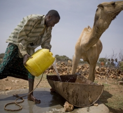 A herder pours water for his camels at an EC funded water catchment point in Harshin district, Ethiopia. Credit: IRIN/Siegfried Modola