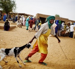 "August 2013, Gao, Mali: A herder in Gao, in north-eastern Mali. The UN Humanitarian Coordinator for the Sahel, Robert Piper, has today urged governments and international organizations to find a ""new approach"" to supporting people across the region. Credit: IRIN/Malin Palm"