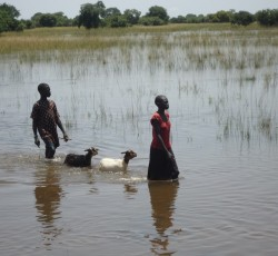 October 2013, Warrap State, South Sudan: Two children evacuate their family's livestock from their village in Warrap State in northern South Sudan. By early November, severe seasonal flooding had affected nine of the 10 South Sudanese states leaving an estimated 223,000 in need of humanitarian assistance. Credit: OCHA