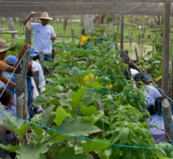 Farmers  in Recula, Colombia, learn to plant new crops and diversify food sources through CERF-supported FAO project. Credit: CERF