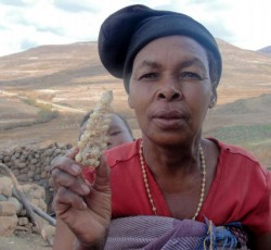 Lesotho's cereal production this year was just a third of the average for the last 10 years. A combination of floods, droughts and early frost destroyed the crops. Credit: OCHA