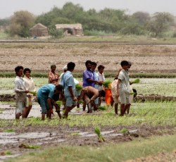 Sindh Province, Pakistan: Farmers, who lost everything during the floods, have now reclaimed their land with some support from a local NGO and OCHA. Credit: OCHA